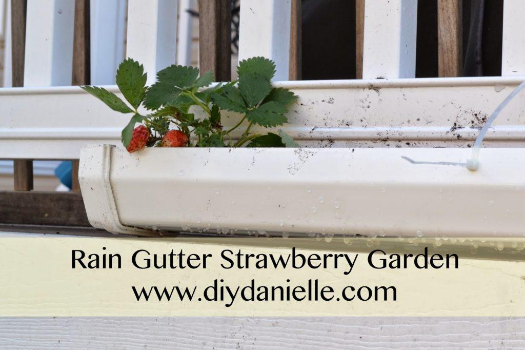 Rain Gutter Strawberry Garden
