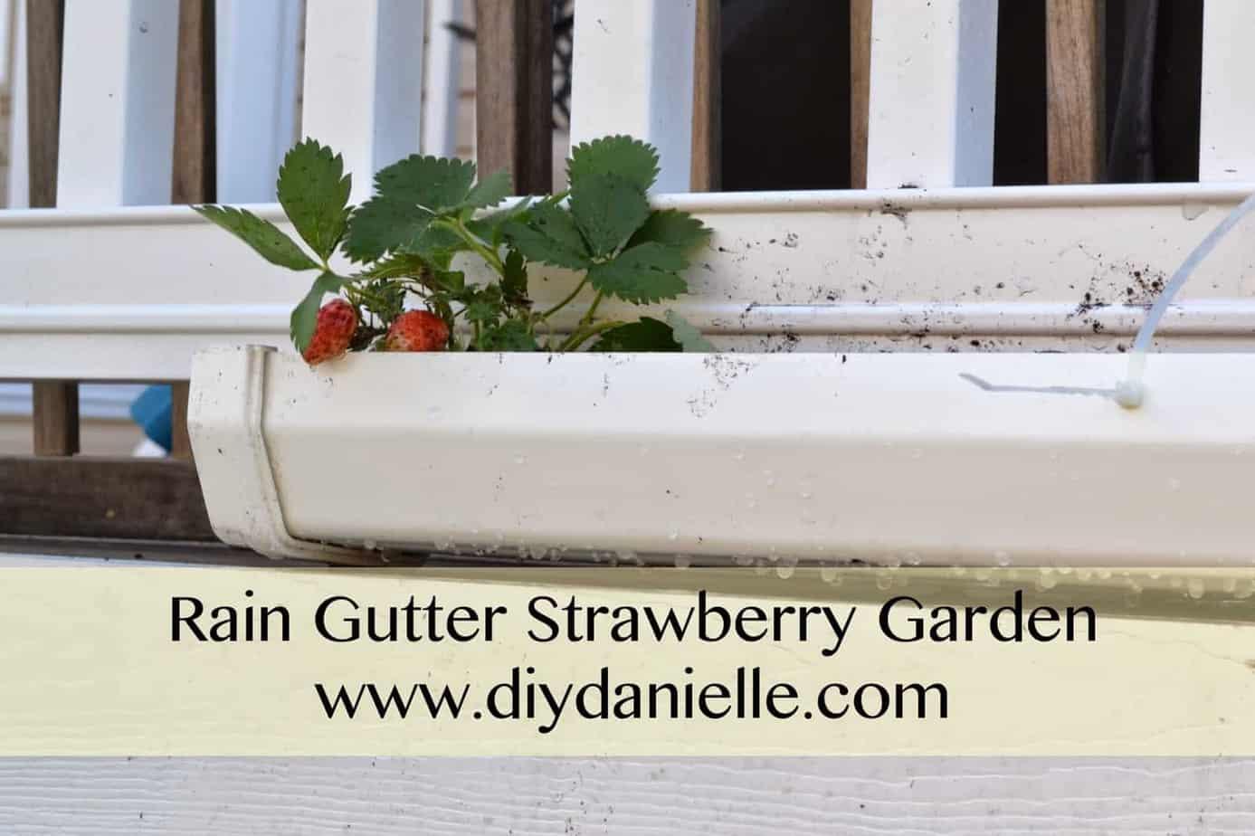 Strawberries In The Gutters Diy Danielle