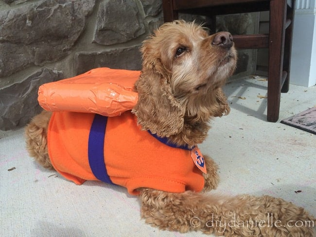 Easy Zuma dog costume, inspired by the TV show Paw Patrol. Worn by a cocker spaniel.