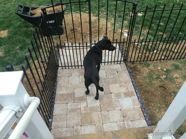 DIYdogrun.Dogstandingatthegate.Thiseasydogruniseasytoinstall nodiggingholesforposts.