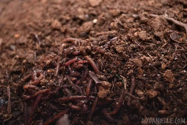 Worm Composting {Part I of the Earth Day Composting Series}