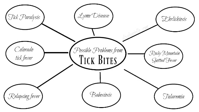 Possible diseases spread by Ticks