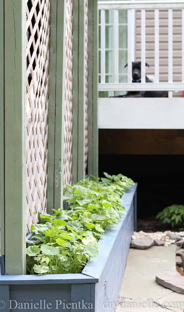 Simple DIY planters with a trellis. These planters and trellis are HUGE so they'll support heavier plants.