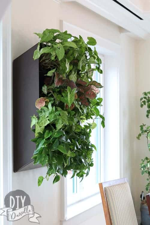Wall planter for live plants. The room has so much natural light that they thrive in here.