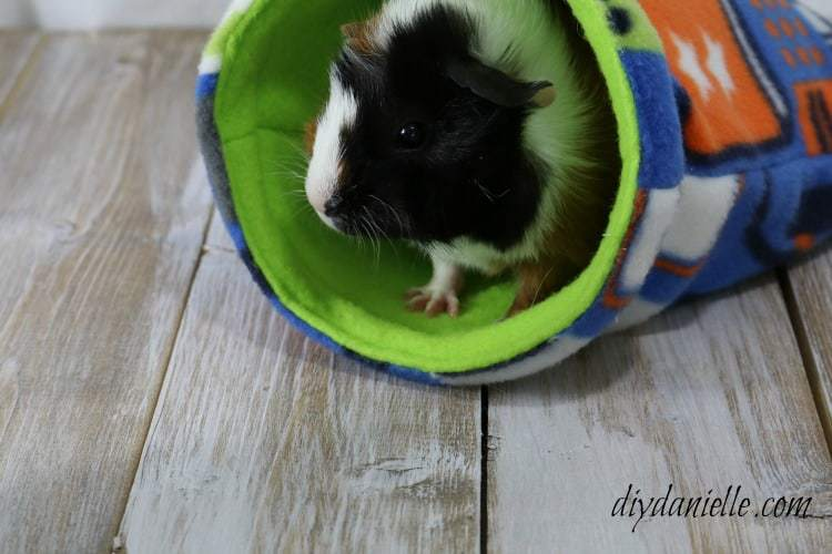 Tips on guinea pig care. Learn how to clean a guinea pig cage, how to feed your cavy, and more!