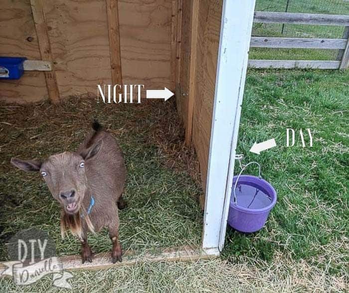 There's a clip for the water bucket on both the inside and outside of the goat barn so it's easy to move back and forth for night or day.