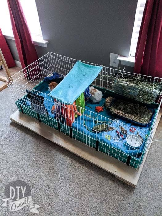 Midwest guinea pig cage on a wood base that can roll around on the floor. Makes for easier cleaning.