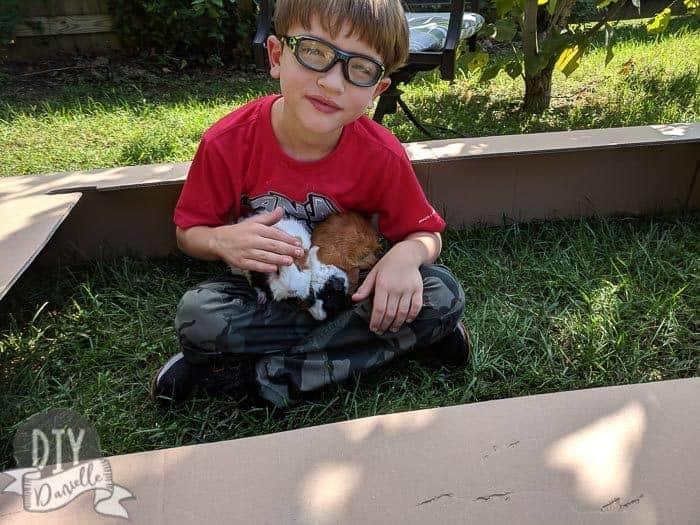 My son enjoying some outside grass time with the guinea pigs. This is a temporary enclosure- just a box with an open top. Not appropriate for an outdoor or unsupervised cage.