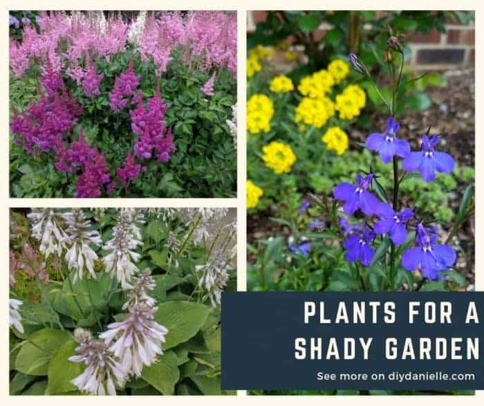Plants to use in your shady garden.