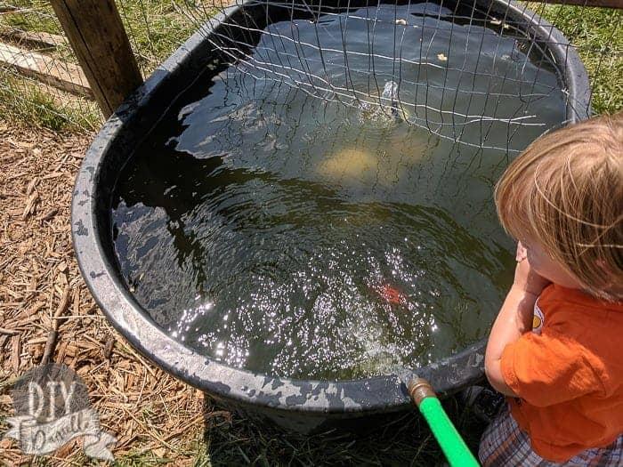 water-trough-clean
