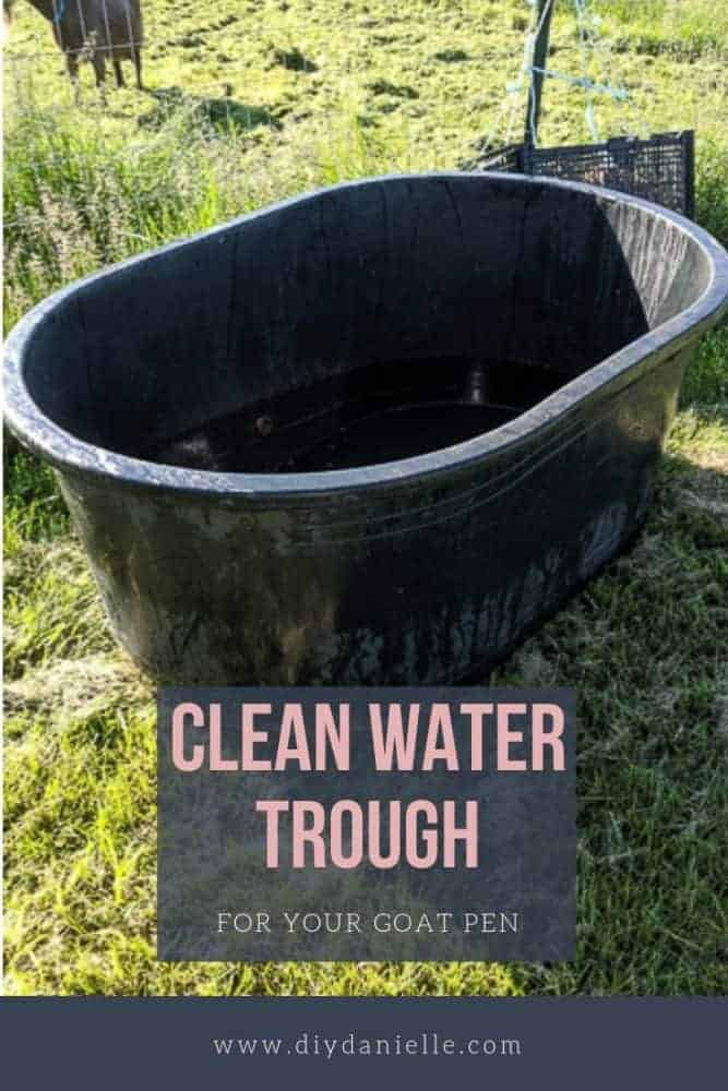 How to keep a water trough clean and algae free for your goats or other livestock.