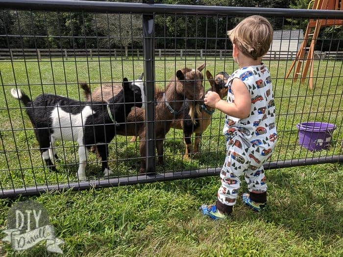 Grow with me romper on my son, age 2, size 3-6 romper. Playing with goats.