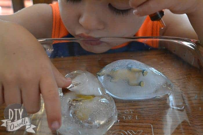 "Dinos frozen inside ""eggs"" of ice."