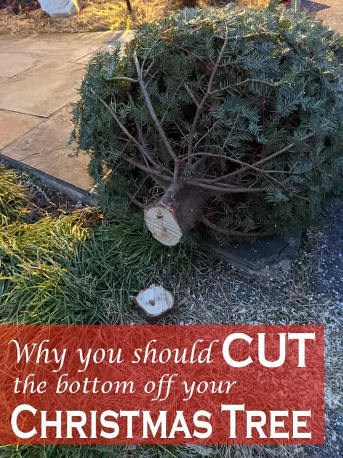 Why you should cut the bottom off your Christmas tree.