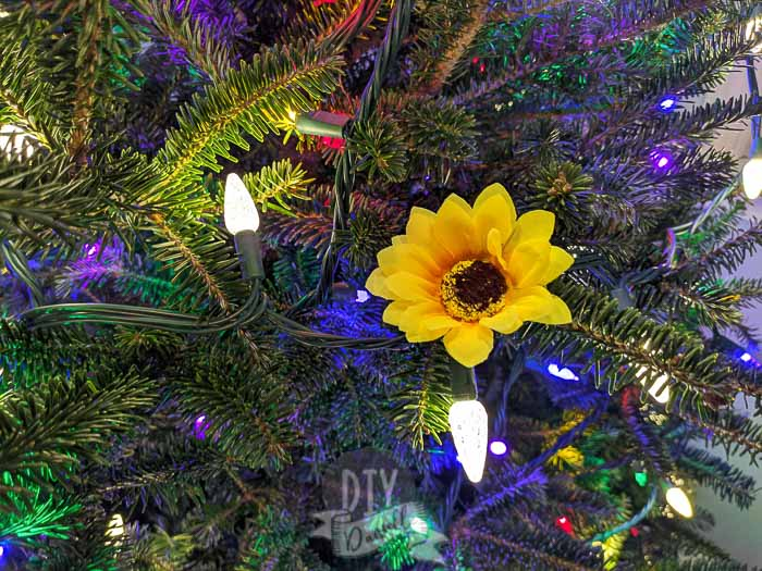 Sunflower contrasting on a Christmas tree against white and multi colored lights.