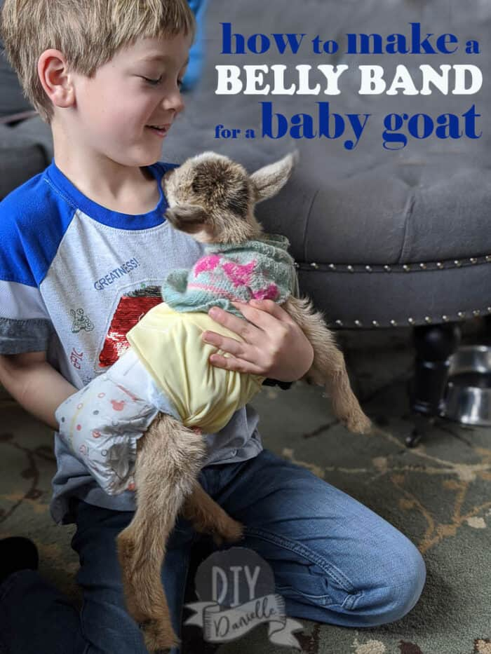 How to make a belly band for a baby goat- GET THE PATTERN!