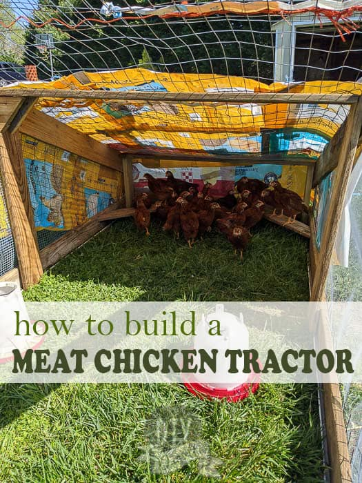 How to build a chicken tractor for your meat chicks and why this is the BEST way to raise meat birds for your homestead.
