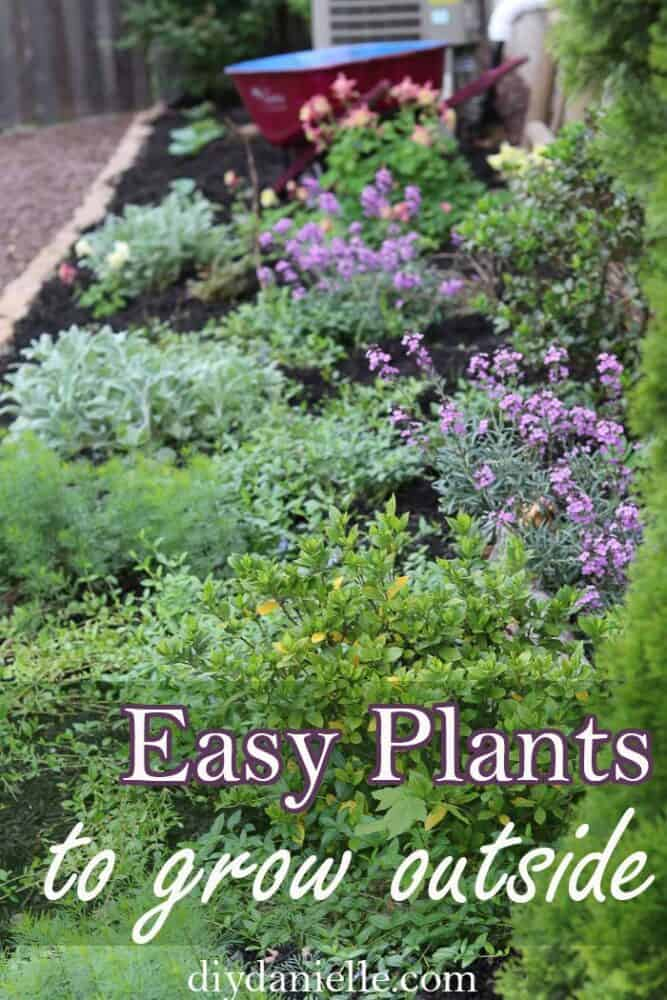 Easy plants to grow outside for your BEST garden ever! These are perfect for front gardens and include a mix of perennials and edible plants.