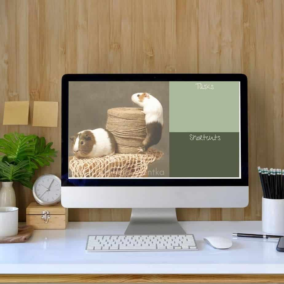 Spring themed background with guinea pigs for PC desktop