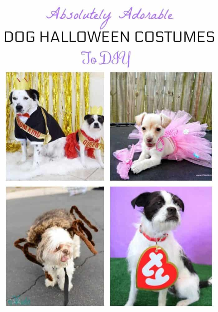 DIY dog Halloween costumes. Here are some fun costume ideas for your dog this holiday!