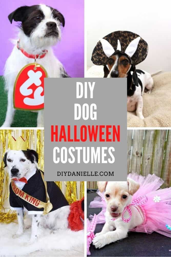 Halloween costume ideas for your dog that you can DIY!