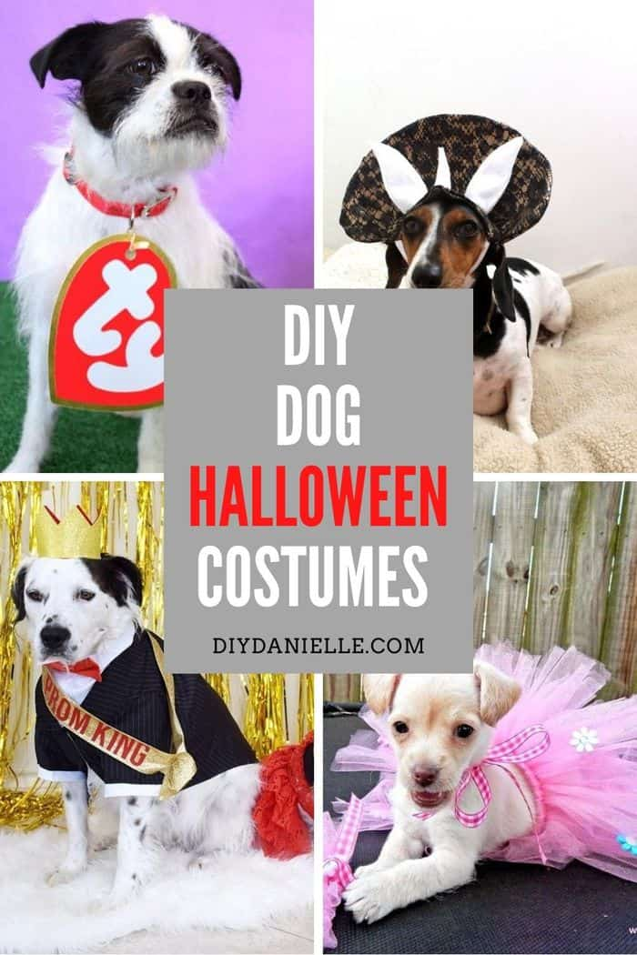 diy dog hallowen costumes to diy