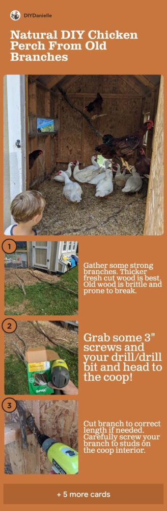 Natural DIY Chicken Perch from Old Branches: 3 steps in the process to attach strong branches to your chicken coop interior to create a perch.