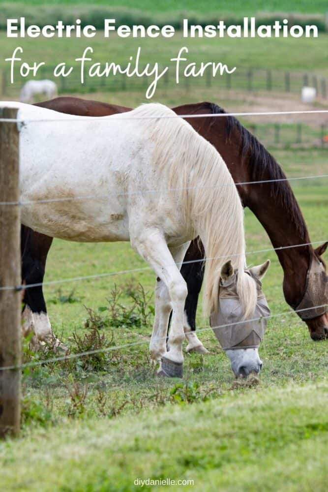 Electric Fence Installation |  Family Farm DIY Tips : Photo of horses grazing inside a pasture with wood posts and electric strands.