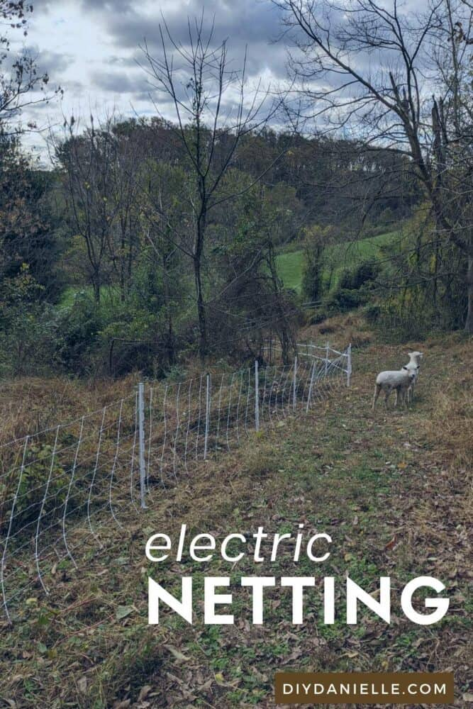 Electric sheep and goat netting through the woods.