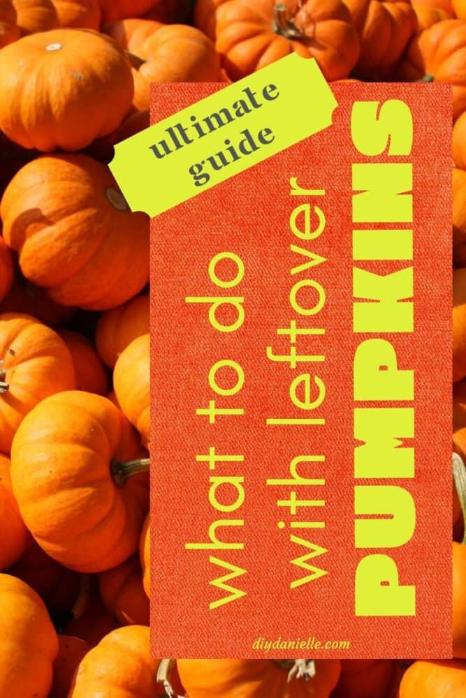 What to do with leftover pumpkins from Halloween or your garden this Fall! Lots of great ideas! Photo: small orange pumpkins.