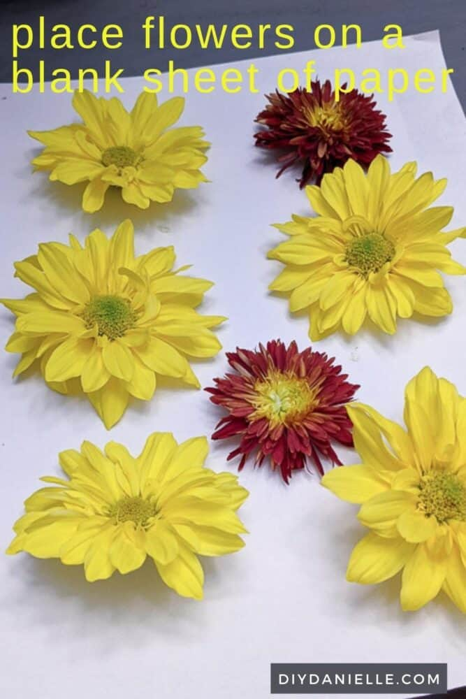Lining flower heads of a similar size up on a piece of plain paper to absorb any moisture.