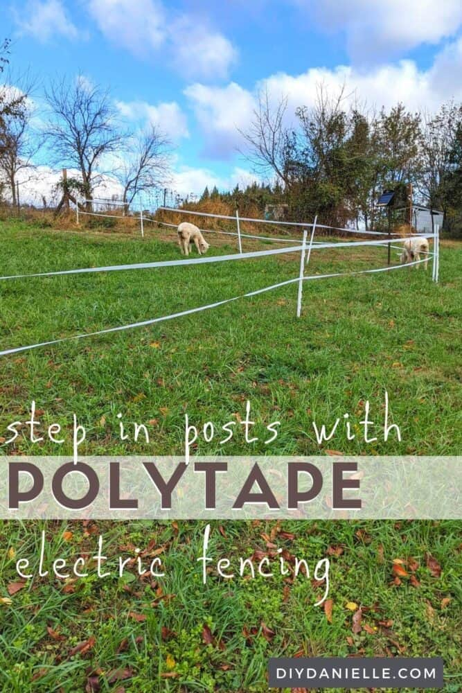 Step in electric fence posts (white plastic) with two strands of polytape. Two sheep grazing nearby.