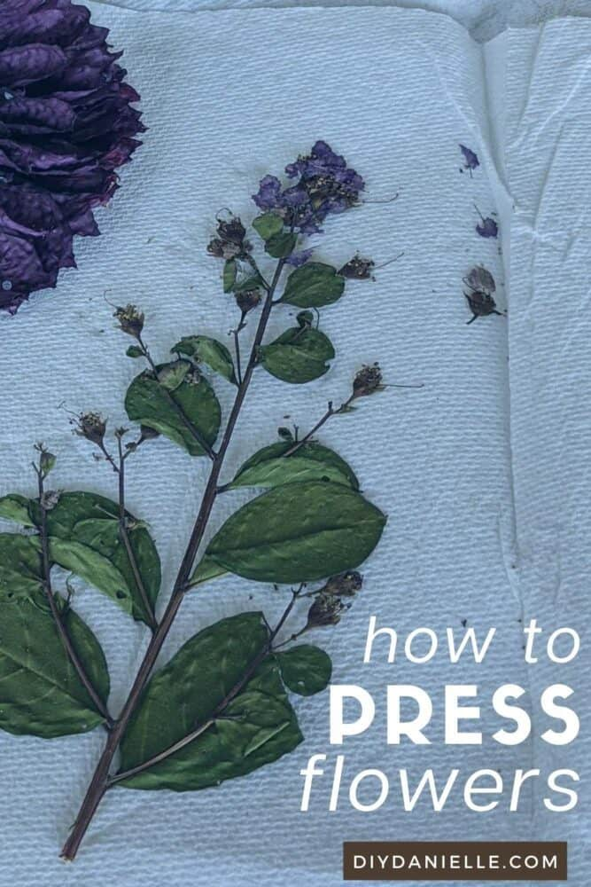 DIY Pressed Flowers: Learn how to preserve flowers by dry pressing them.