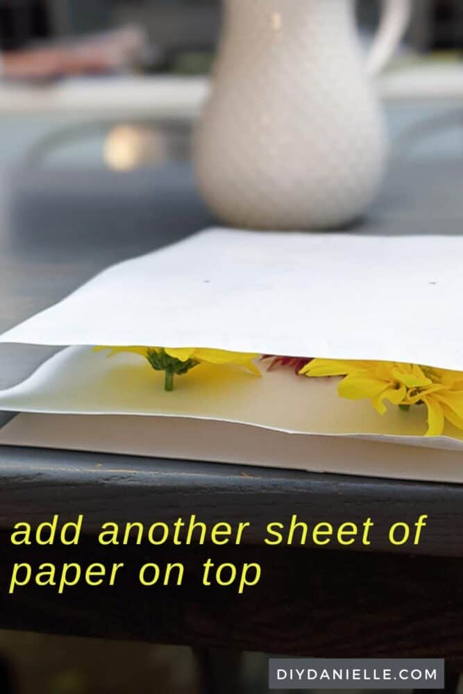 Cover with another sheet of paper so the flowers are sandwiched between the paper.