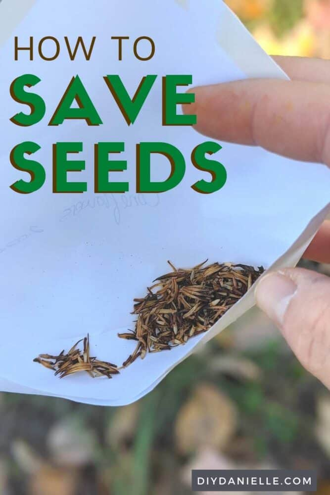 How to save seeds from your garden! Photo of some flower seeds inside a white envelope.