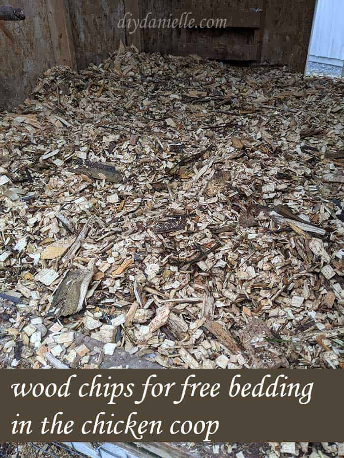 I use wood chips for bedding in my chicken coop.