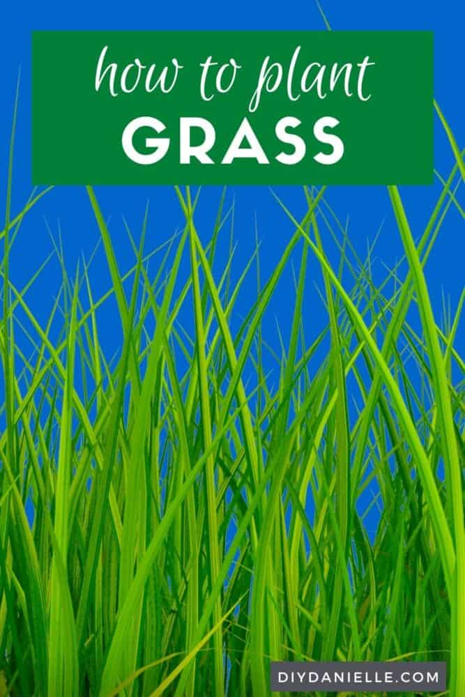 How to plant grass: close up picture of grass.