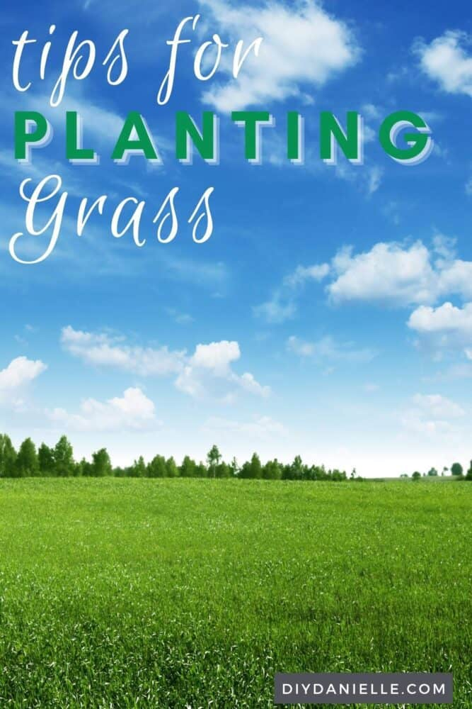 Tips for planting grass: photo of a large green lawn.