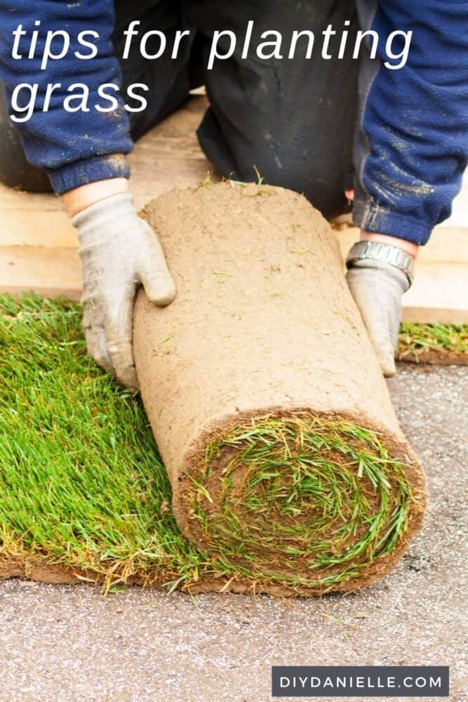 Tips for planting grass: Photo of someone rolling out sod.