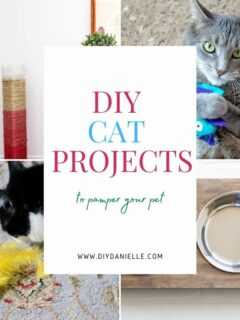 cat projects to diy feature image