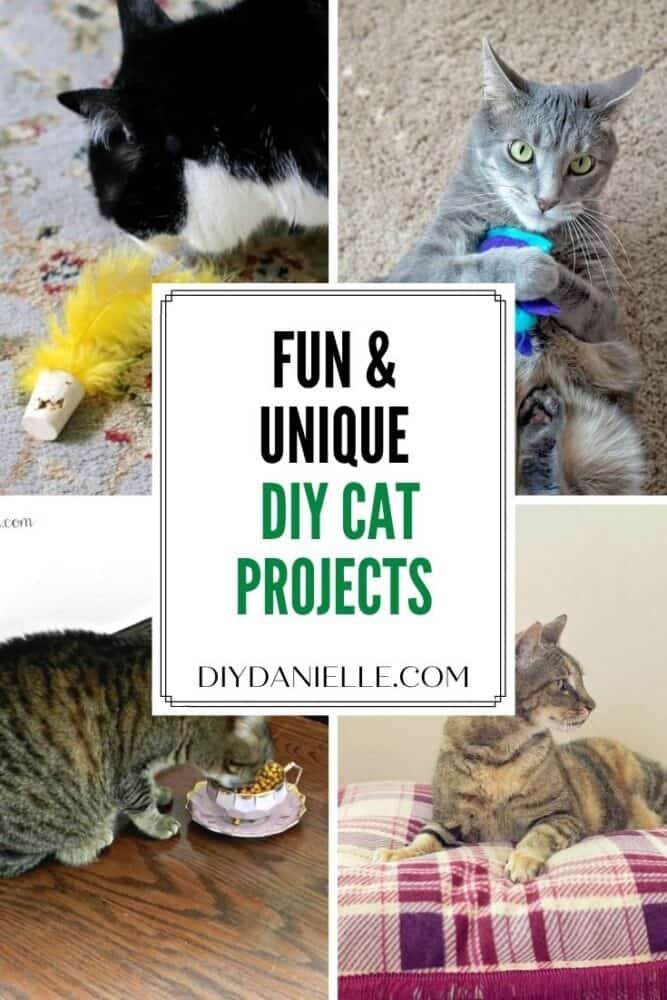 DIY cat projects: Crafts that you can make for your cats!
