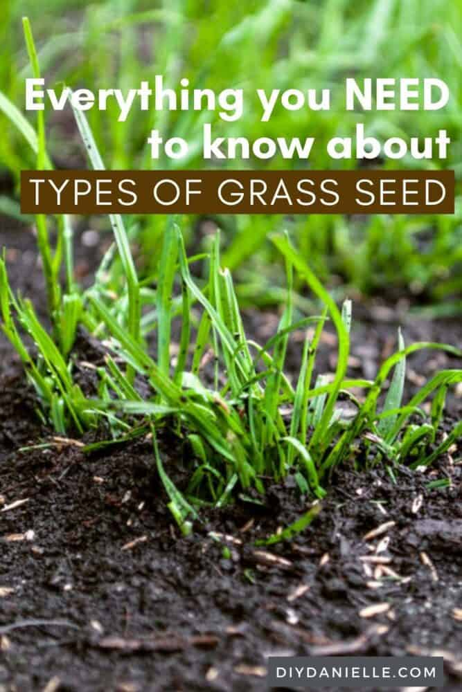 Everything you need to know about types of grass and grass seed. Photo of green grass in dark rich soil.
