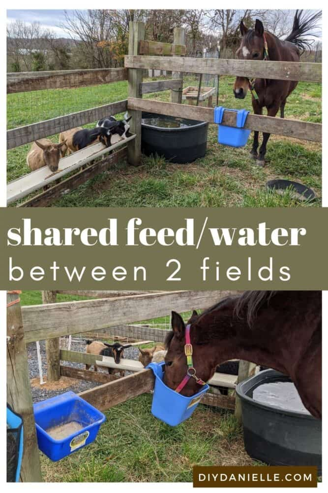 Shared Feed/Water between two fields to make farm chores easier. My chore and goats eat next to each other and share a trough. This means I only need to fill one trough instead of two.