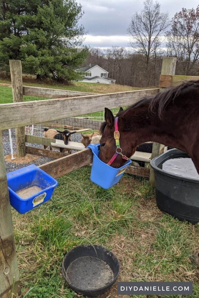 Shared feeding area for two fields. My horse and goats eat sort of side by side, but in different fields. I can feed them all at the same time and use a stall in my run in shed for feed storage.