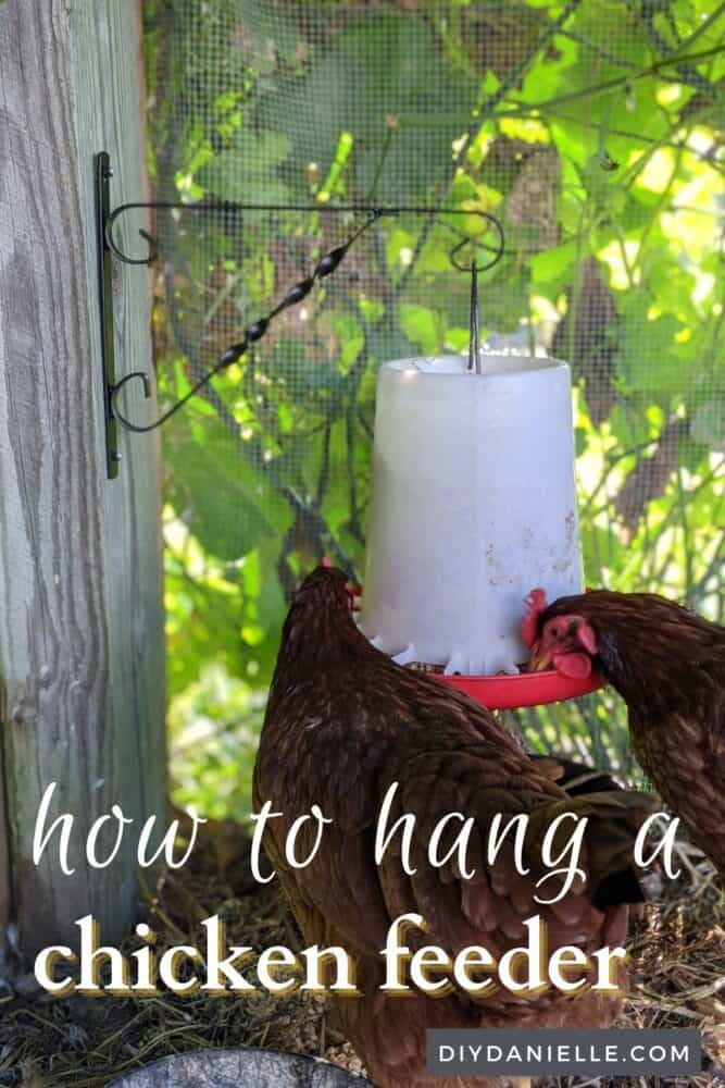 Use a plant bracket to hang your chickens' feed and water. It's easy to do, attractive and keeps feed off the ground!