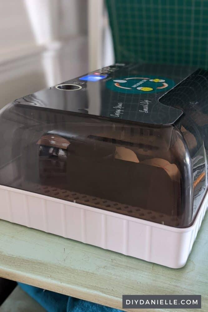Eggs in an incubator.