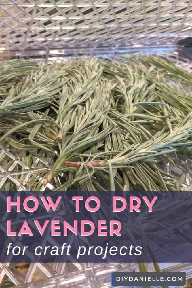 How to harvest and dry lavender for use in craft projects.