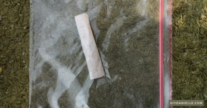 Placing a rolled, wet paper towel with tomato seeds on it into a plastic zip bag.