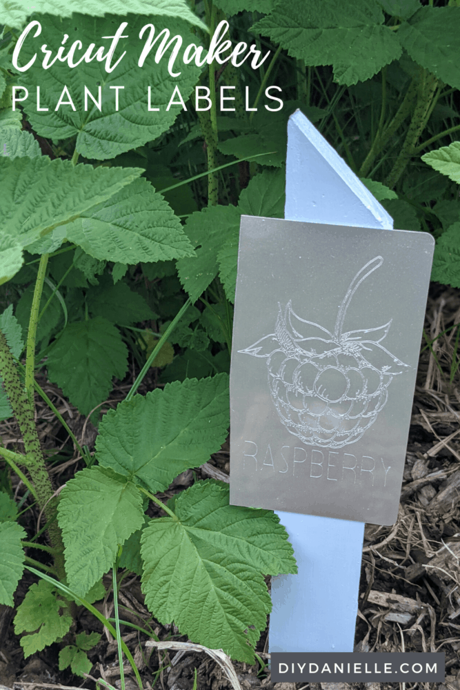 """Plant labels made with the Cricut Maker: Raspberry bushes in background with a blue stake and an engraved aluminum plant label that says """"raspberry."""""""