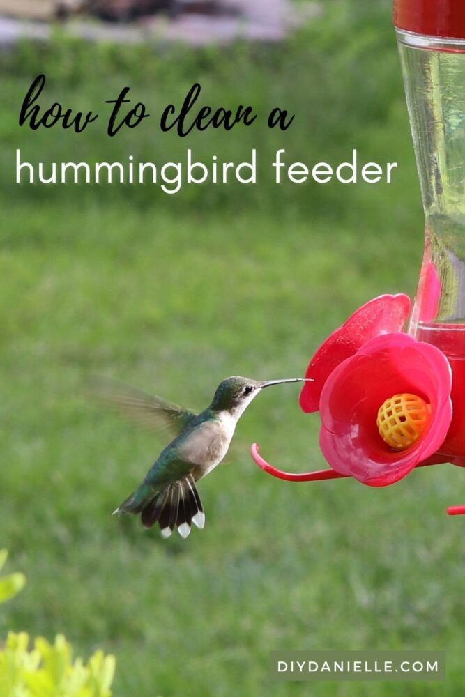 How to Clean a Hummingbird Feeder: How and why you need to clean your feeder REGULARLY so your birds won't get sick.